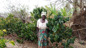 Older women co-operator in the fields of Malawi